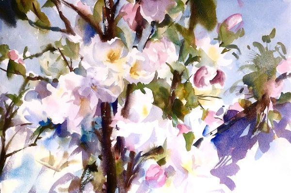 Apple Blossom watercolour
